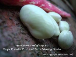 Beach Plum Chef Personal Chef of Cape Cod